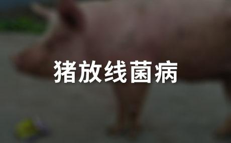 猪放线菌病的临床症状有哪些?